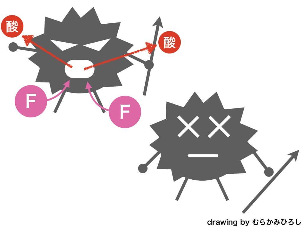 フッ素が歯に働きかける効果の抗菌作用の図解