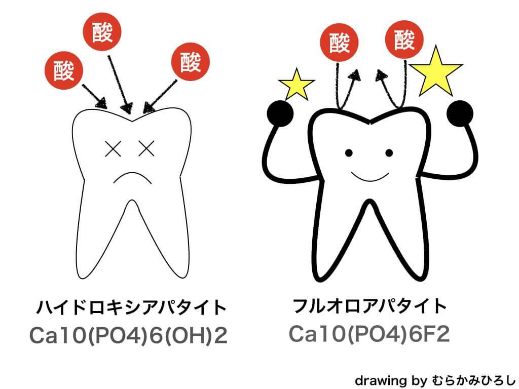 エナメル質構造を作って歯質の強化を図解した絵